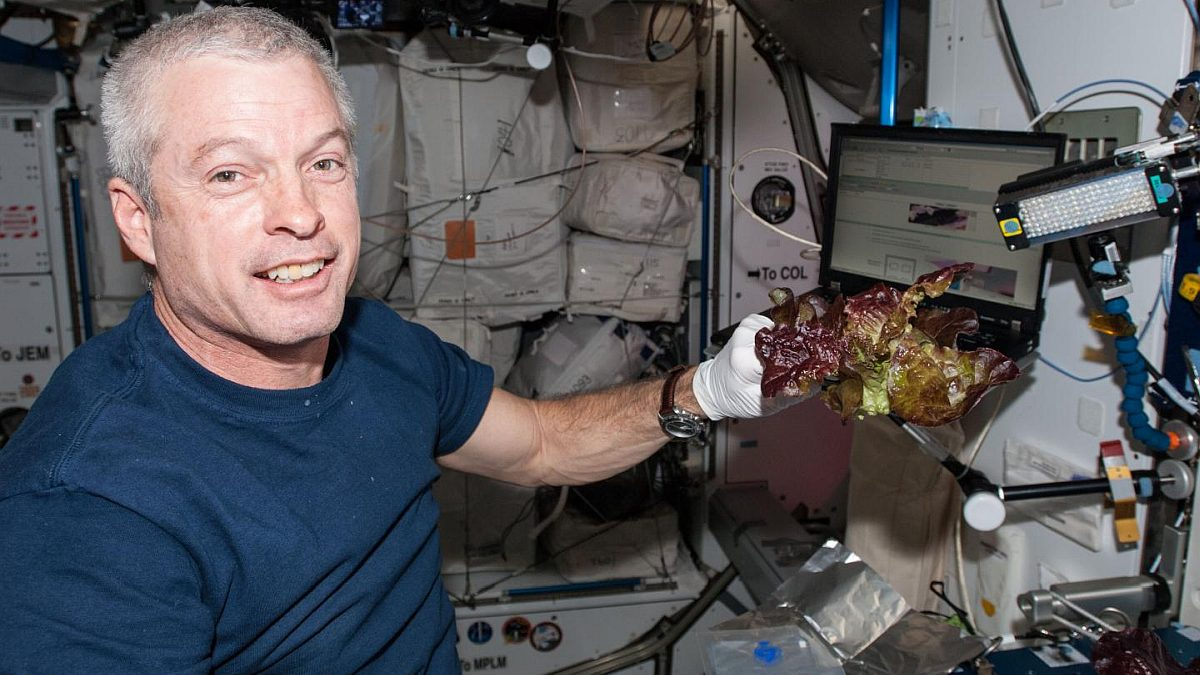 ISS Astronauts Grow Earth-Like Fresh Lettuce in Space